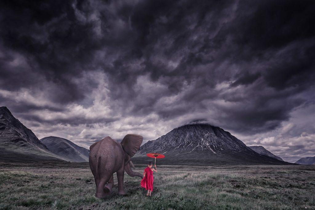 Elefant wird von Kind geführt