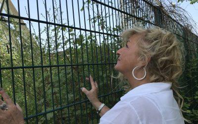 Mindset Spontaneitätwill gut geplant sein|PotentialProfiler Elke Dola